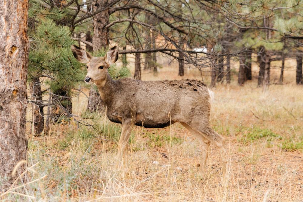 ColoradoTrip-2602.jpg