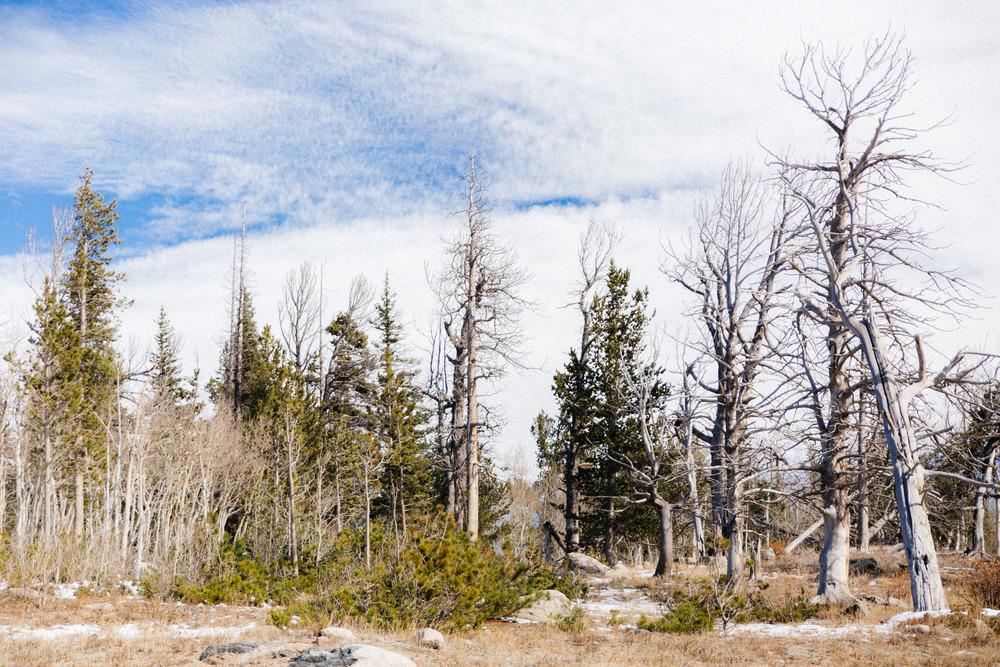 ColoradoTrip-2770.jpg