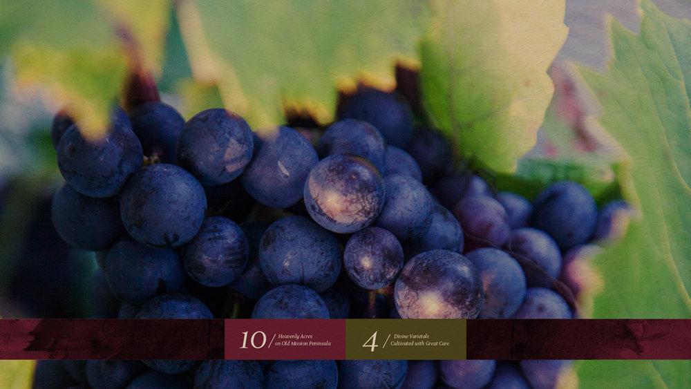 DDV-WEB_Purple-Grapes.jpg