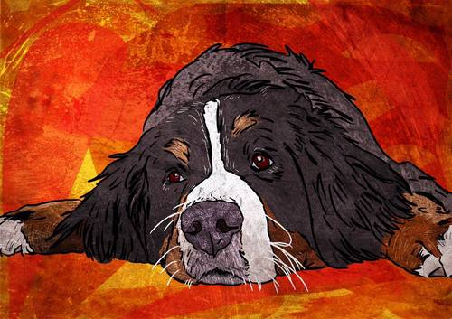 Bernese Mountain Dog Digital Pet Portrait