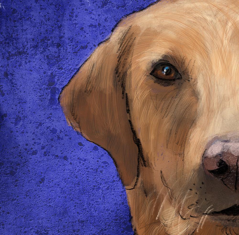 Doctor Labrador Retriever Uniform Pet Detail