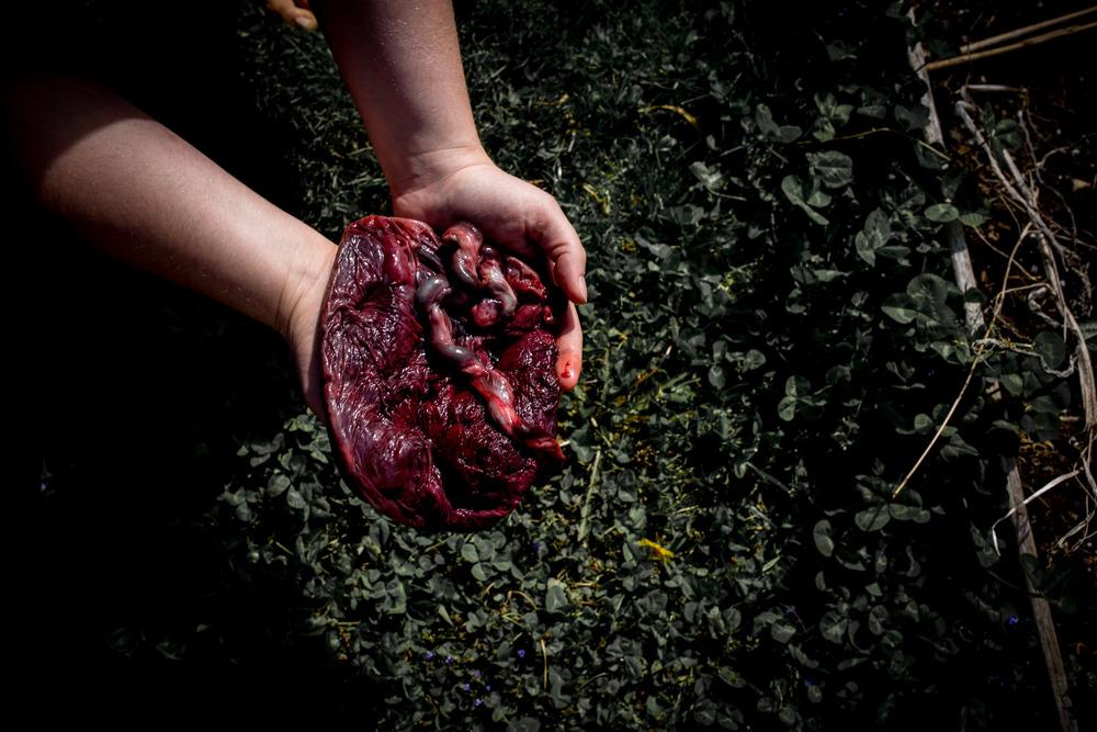 Matt+Steph_2016_Placenta (41 of 80).jpg
