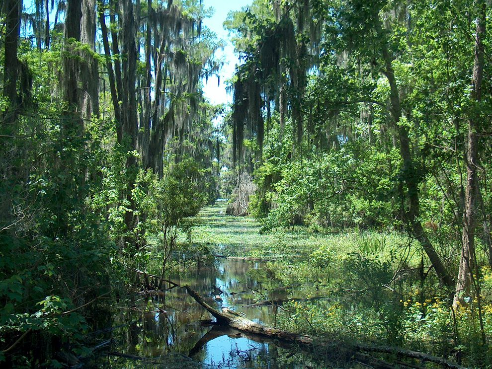 Louisiana swamp from National Geographic Encyclopedic Entries
