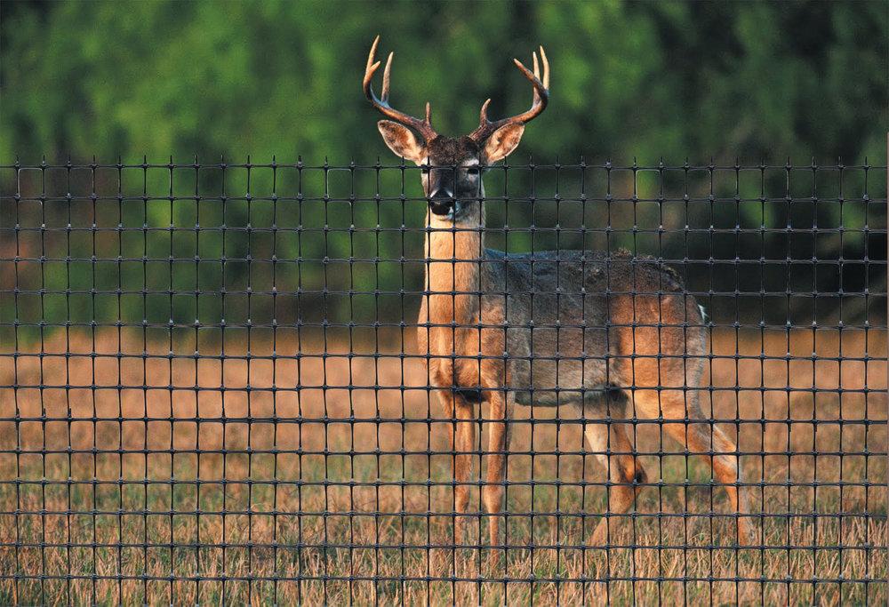 deer_fence_tenax.jpg