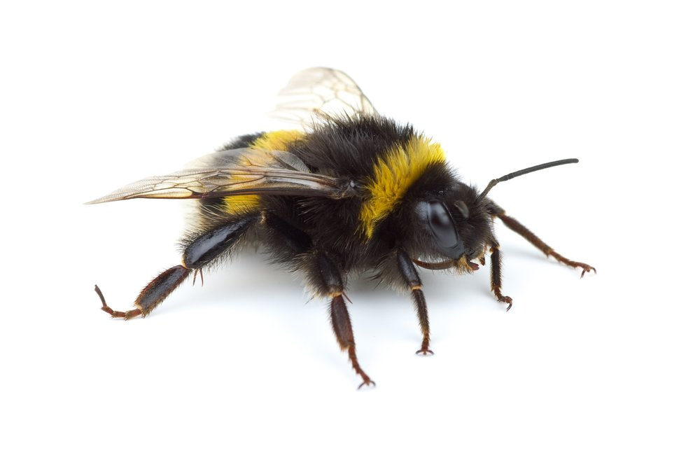 Bees | Wasps — Barry\'s Pest Control