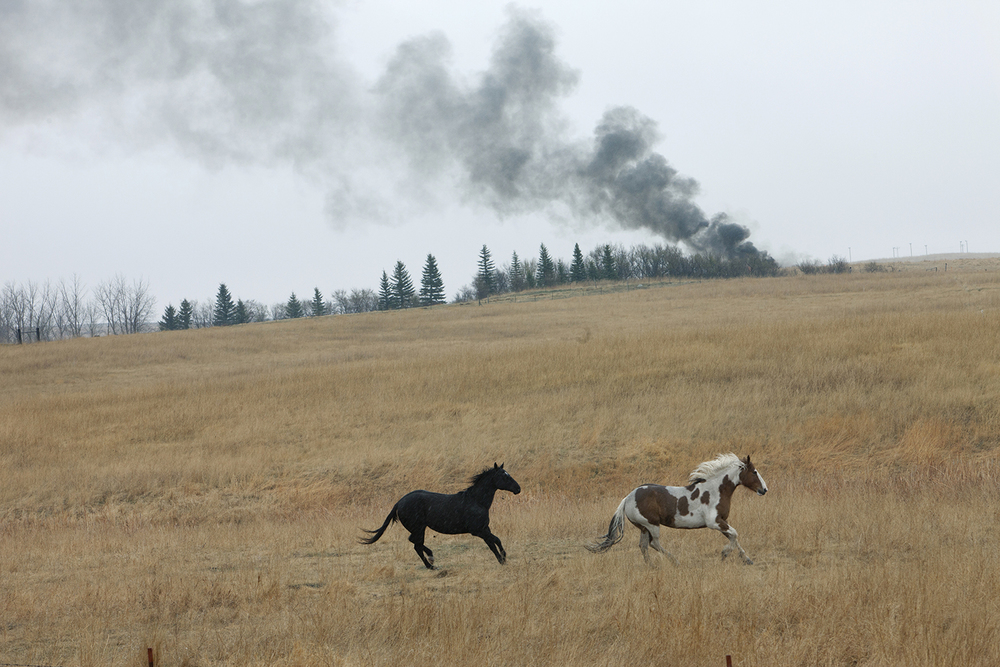 Horses  Near Keene, ND.  2012
