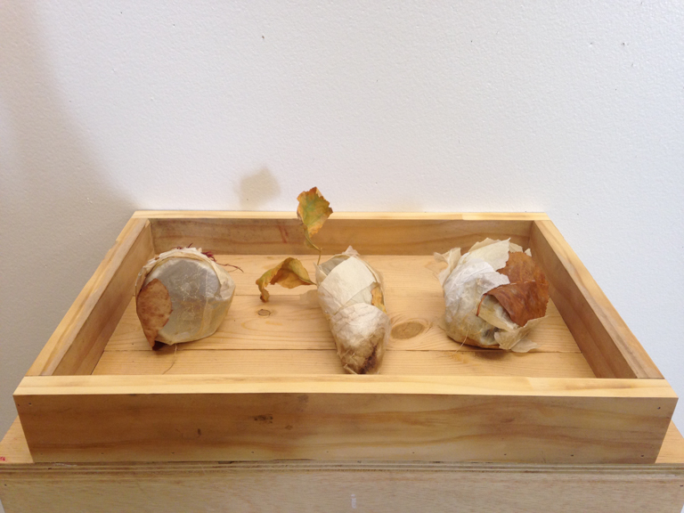Dormant  2014 aper, muslin, copper, plant matter, gauze, wood, natural dyes ach about 3 in x 3 in x 2 in