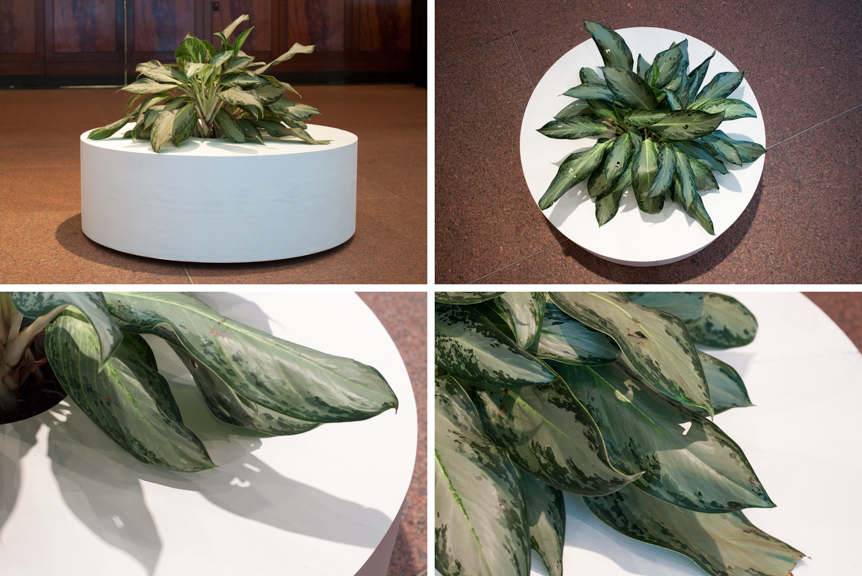 Untitled (plant, clock),  2012, live plant, dimensions variable