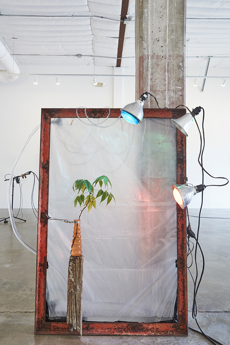 Untitled , 2017. Branch, vase, water, lights, plastic, frame, pump, dimensions variable