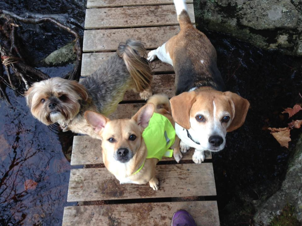 Our Petite off leash group