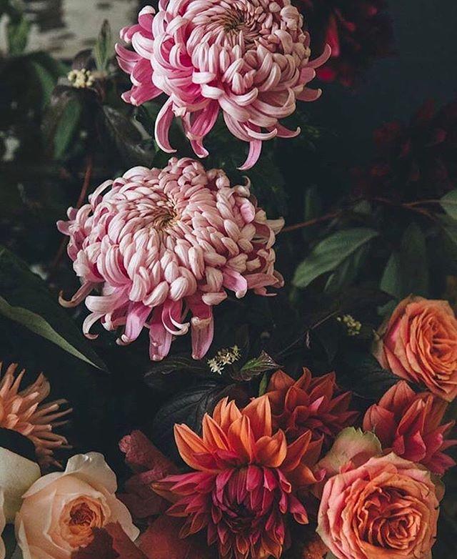 These flowers ✨ color inspo via @designsponge