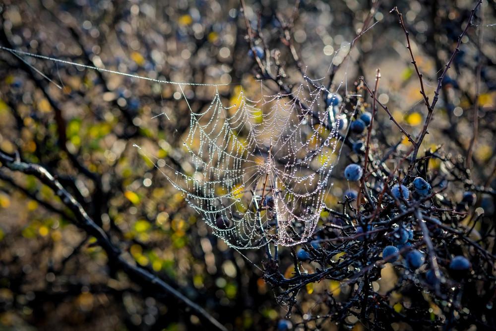 """Frost web"" Tasmania. Fuji XE1 60mm Macro"