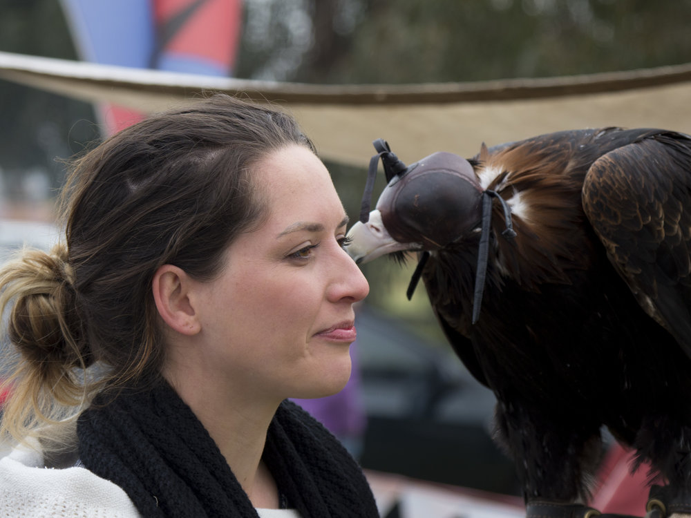 Eagle Handler, Sheffield Tasmania