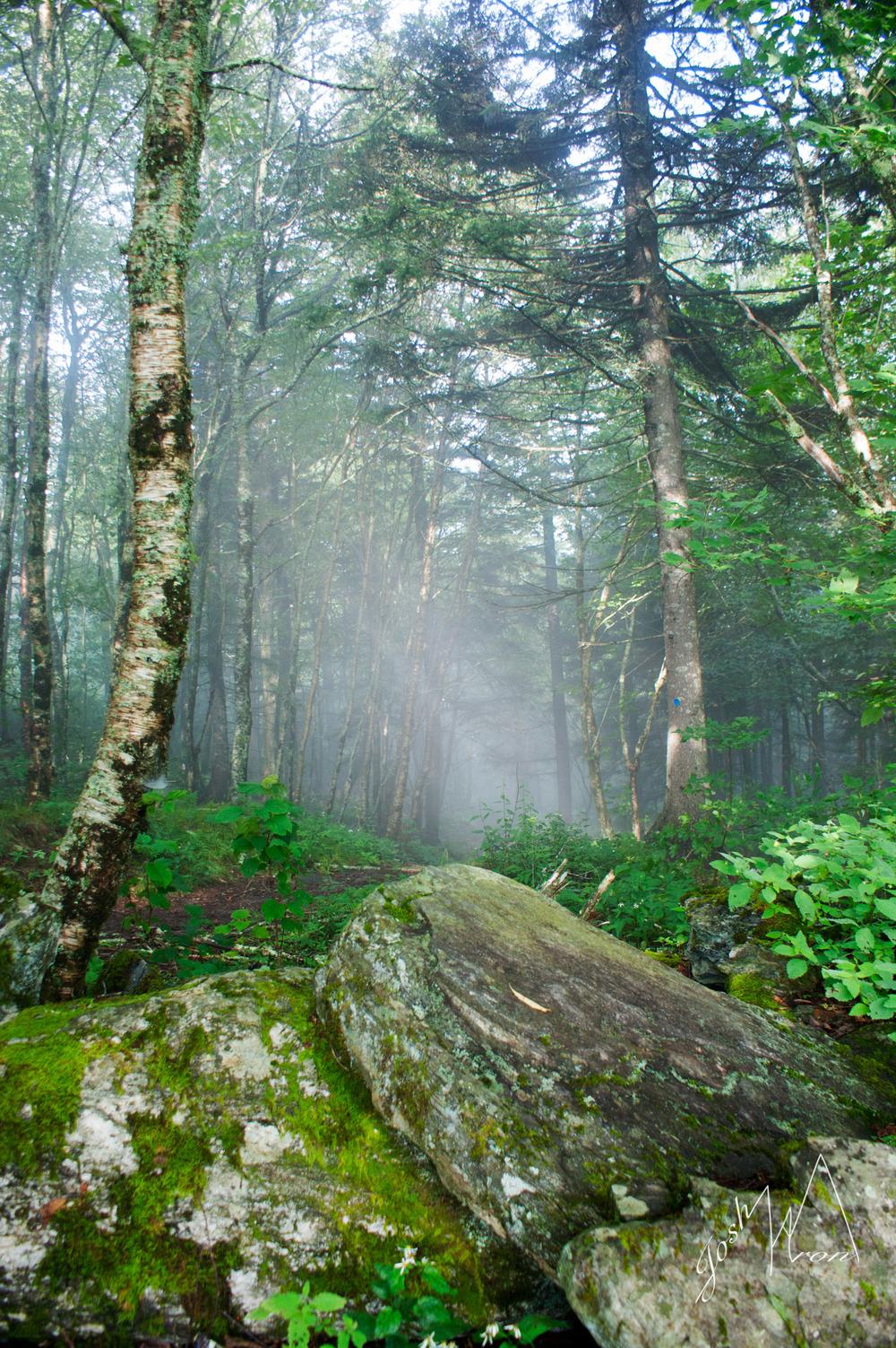 S Woods fog Vert.jpg