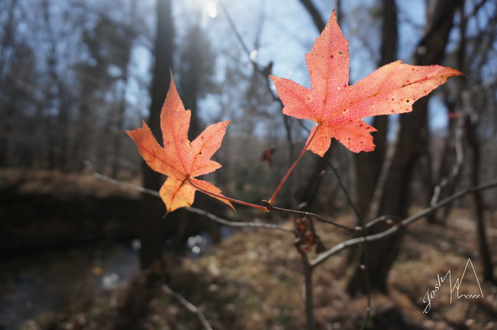 SOrange 2 leaf.jpg