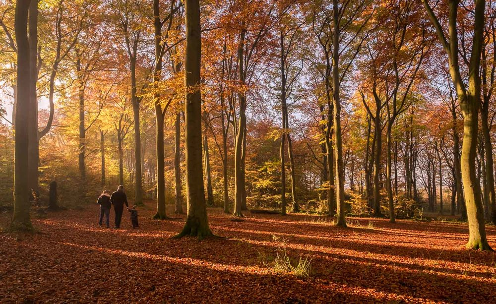 Family take a stroll through the Autumn colours