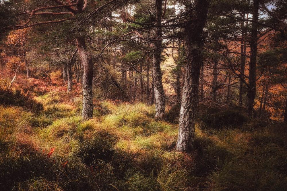NigelCookePhotography_NorthernIreland-110.jpg