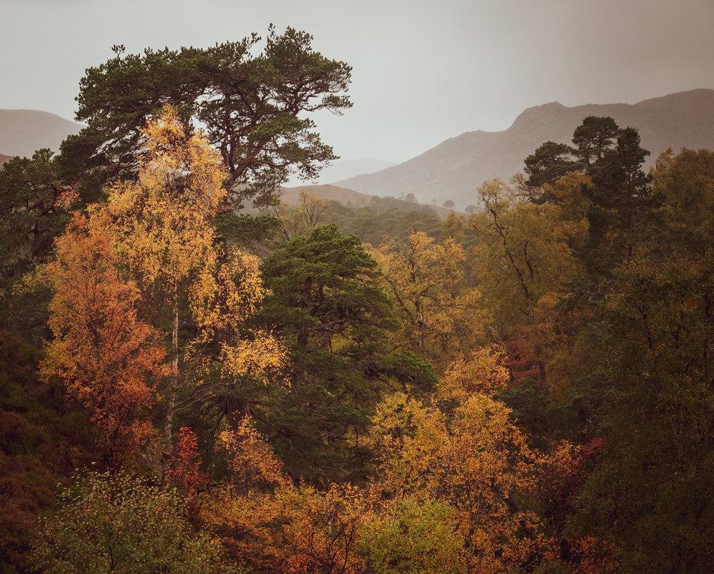 NigelCookePhotography_NorthernIreland-108.jpg