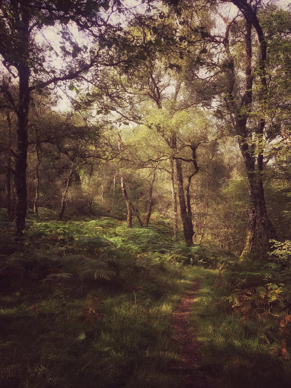NigelCookePhotography_NorthernIreland-97.jpg