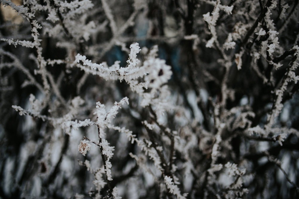 Frost, winter, lifestyle blogging