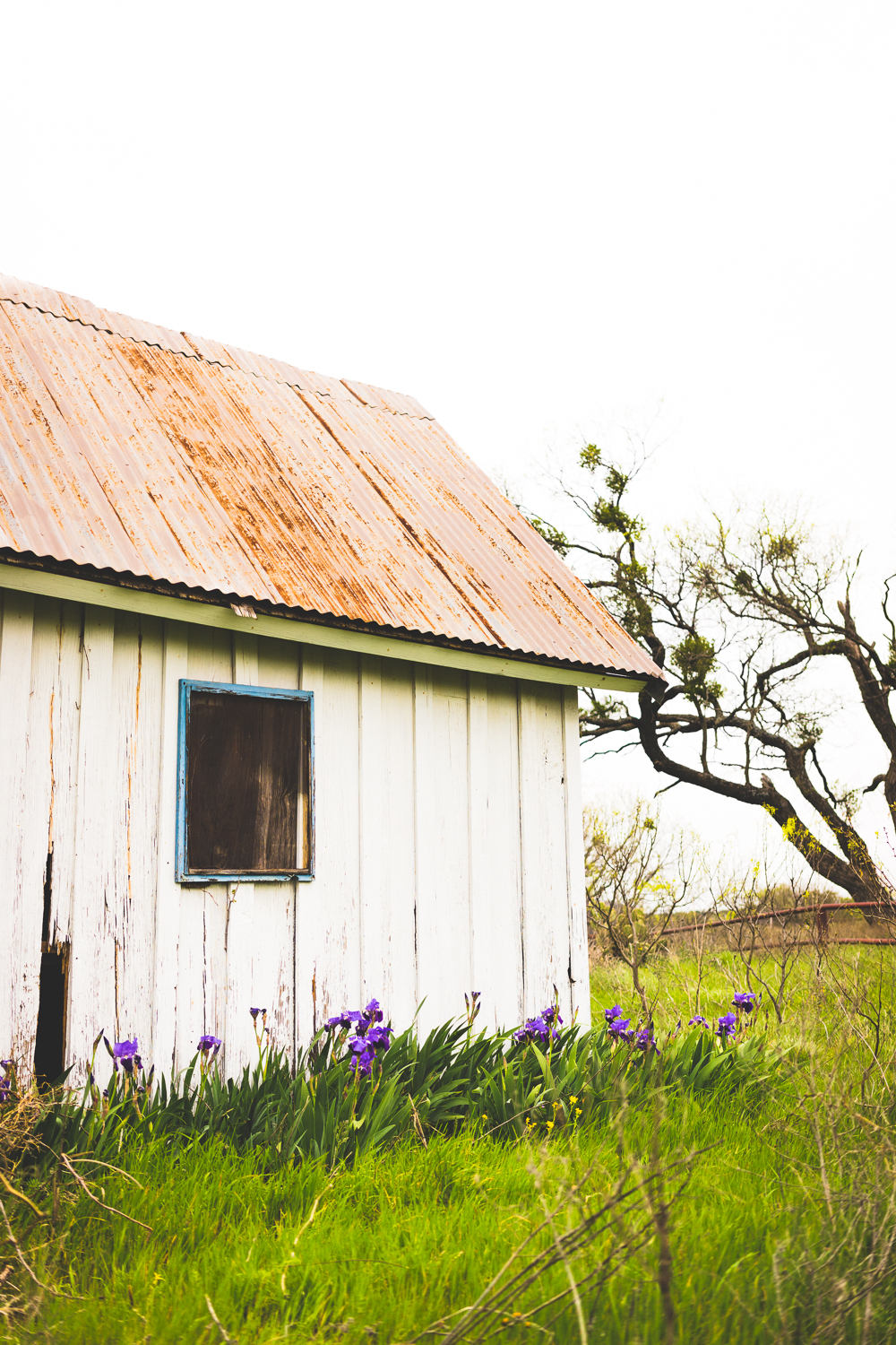 The shed along the side of the ranch house had the Texas state wildflower growing next to it!