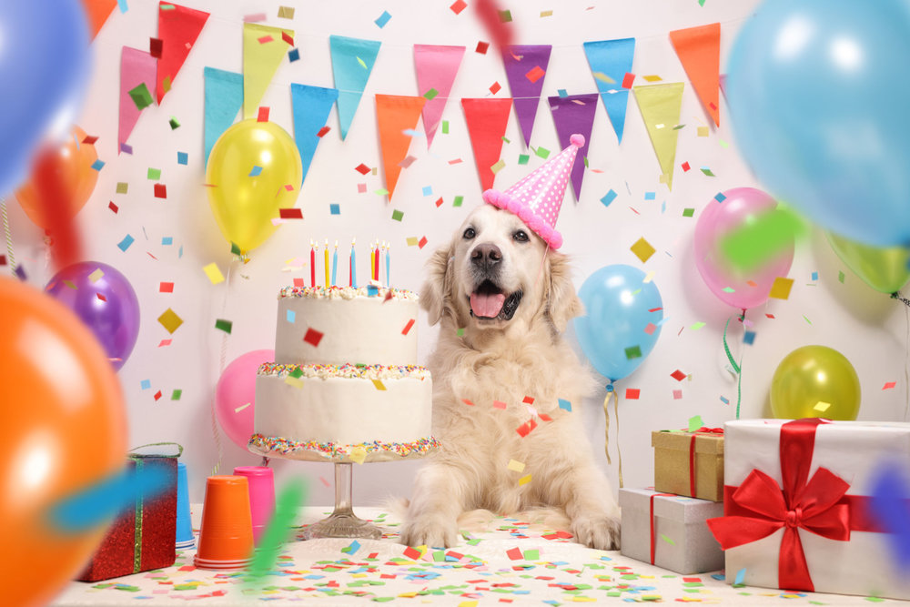 Happy Bauday - Compleanno per cani.jpg