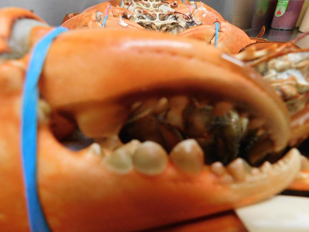 crabs 004.JPG
