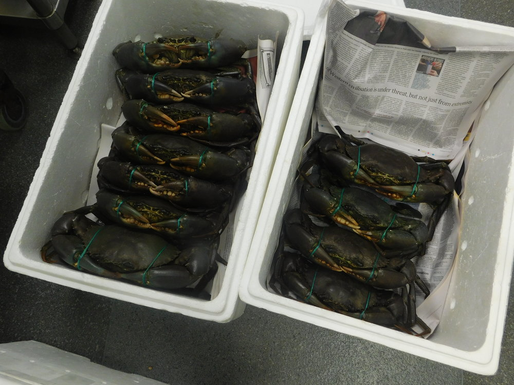 last crabs 008.JPG