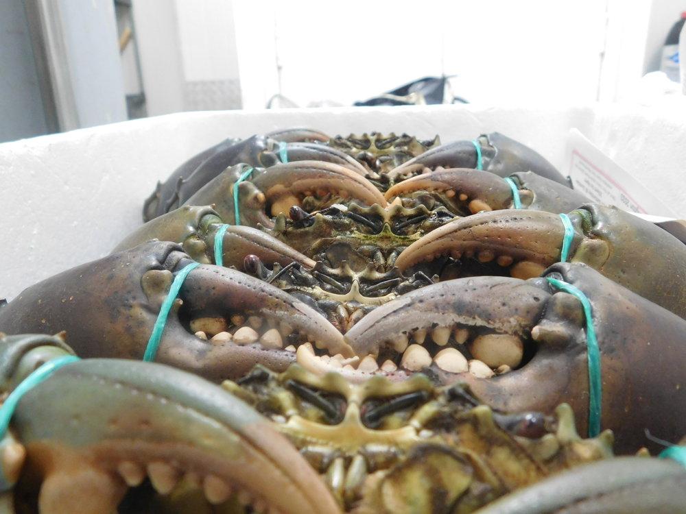 last crabs 009.JPG