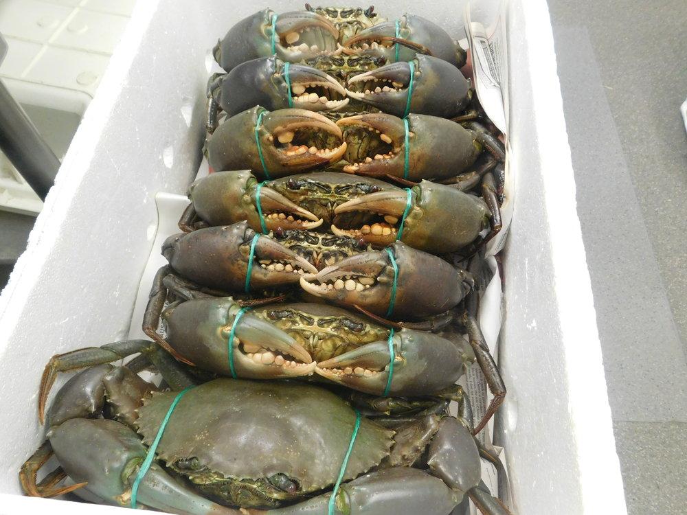 last crabs 007.JPG
