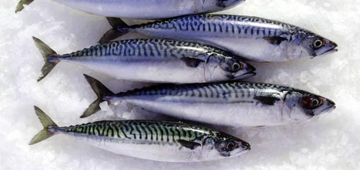 mackerel-image.jpg