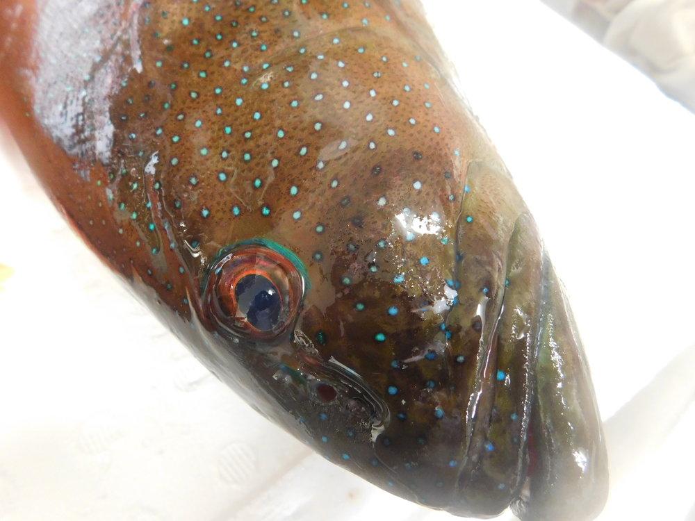 trout kennedy 043.JPG