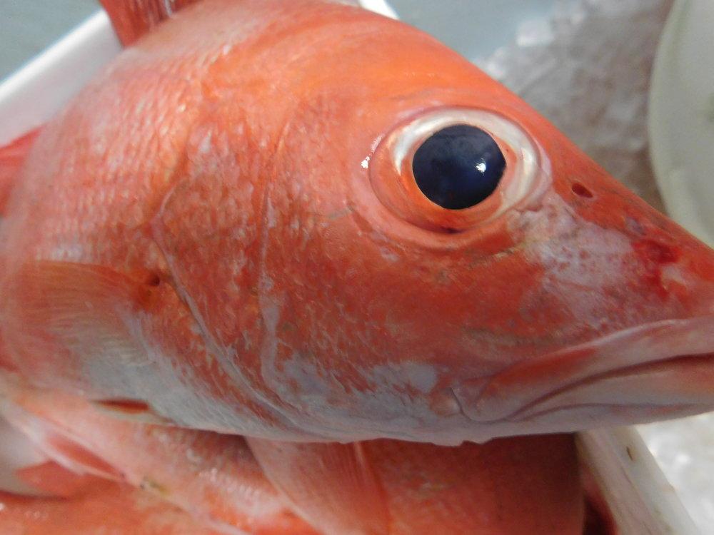 christmas fish 001.JPG