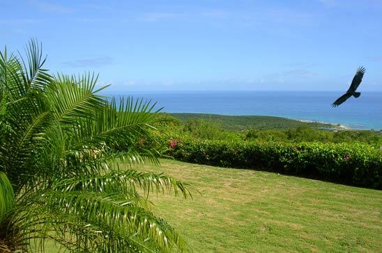villa_kelso_duncans_jamaica07.jpg