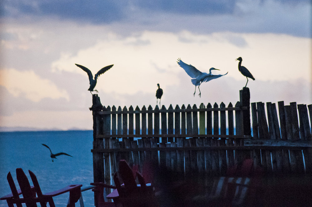 Horizon_Landscape_Bluefileds_Jamaica29.jpg
