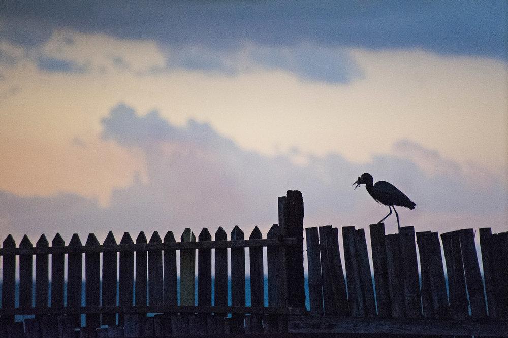 Horizon_Landscape_Bluefileds_Jamaica30.jpg