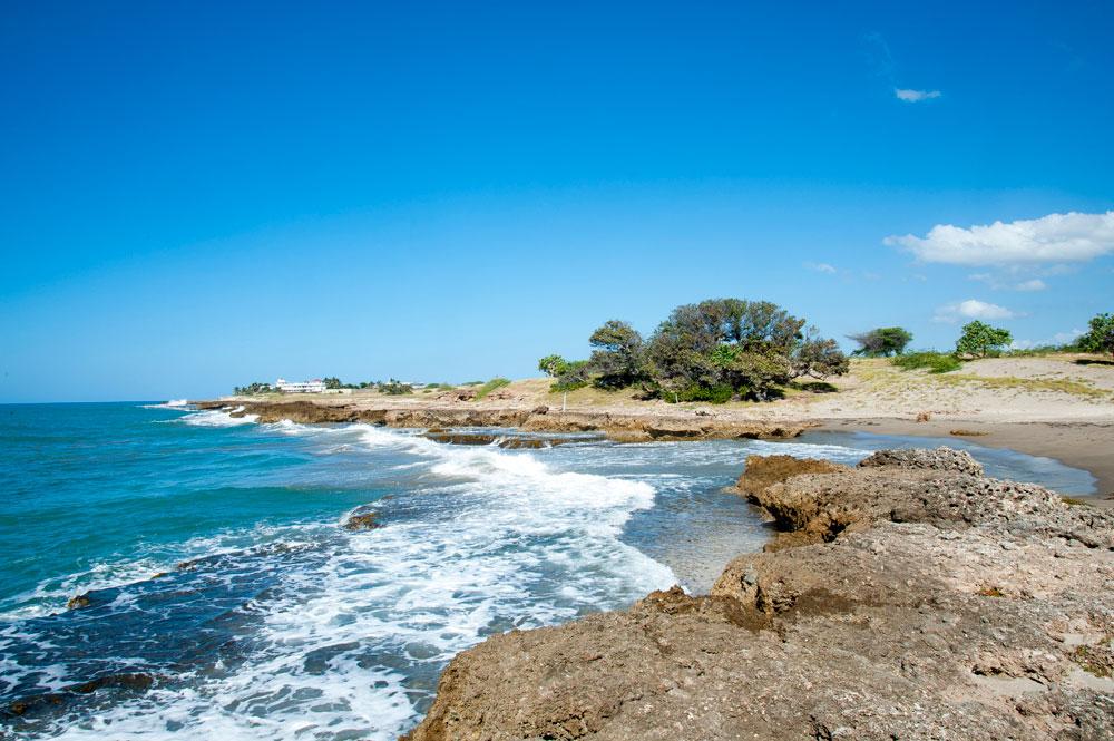 Driftwood_Treasure_Beach_Jamaica_33.jpg