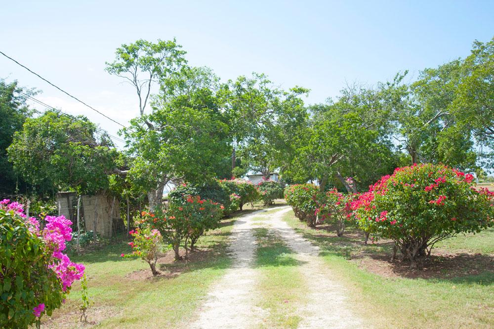Driftwood_Treasure_Beach_Jamaica_43.jpg