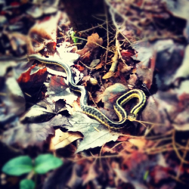 snake in the woods, Brian Pettengill