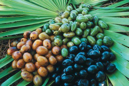 saw-palmetto-plant.jpg