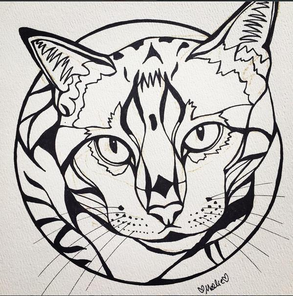 Duma Cat