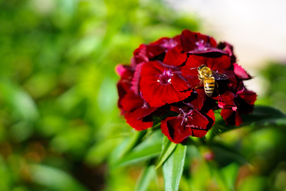 Honeybee_f2-8.jpg