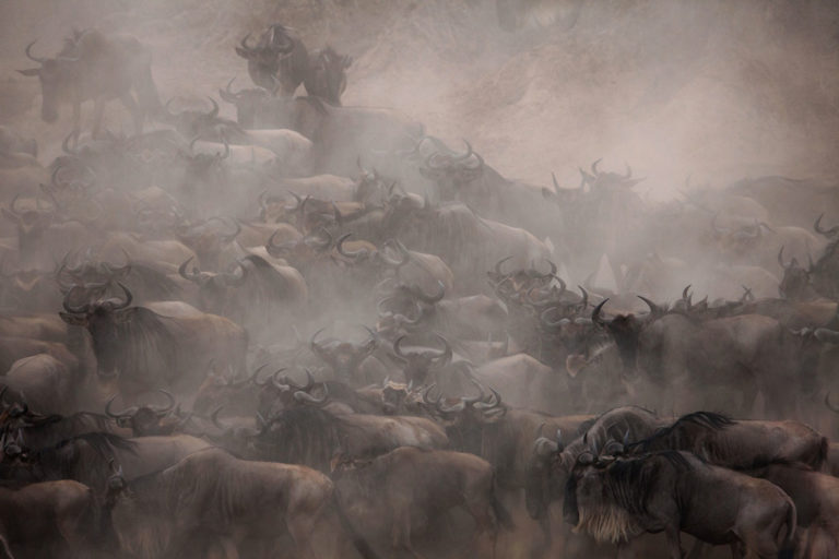 The Wild Unknown - A photographer's incredible insight into the mysterious wild life