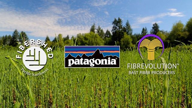 Thank you @patagonia for awarding us another Environmental Grant to support our flax to linen work!!! We are honored and thankful for the continued support.  @fibrevolution_pnw #fibershed #regenerativeagriculture #flaxislinen #oregon #loveoflinen #community #linen #flax