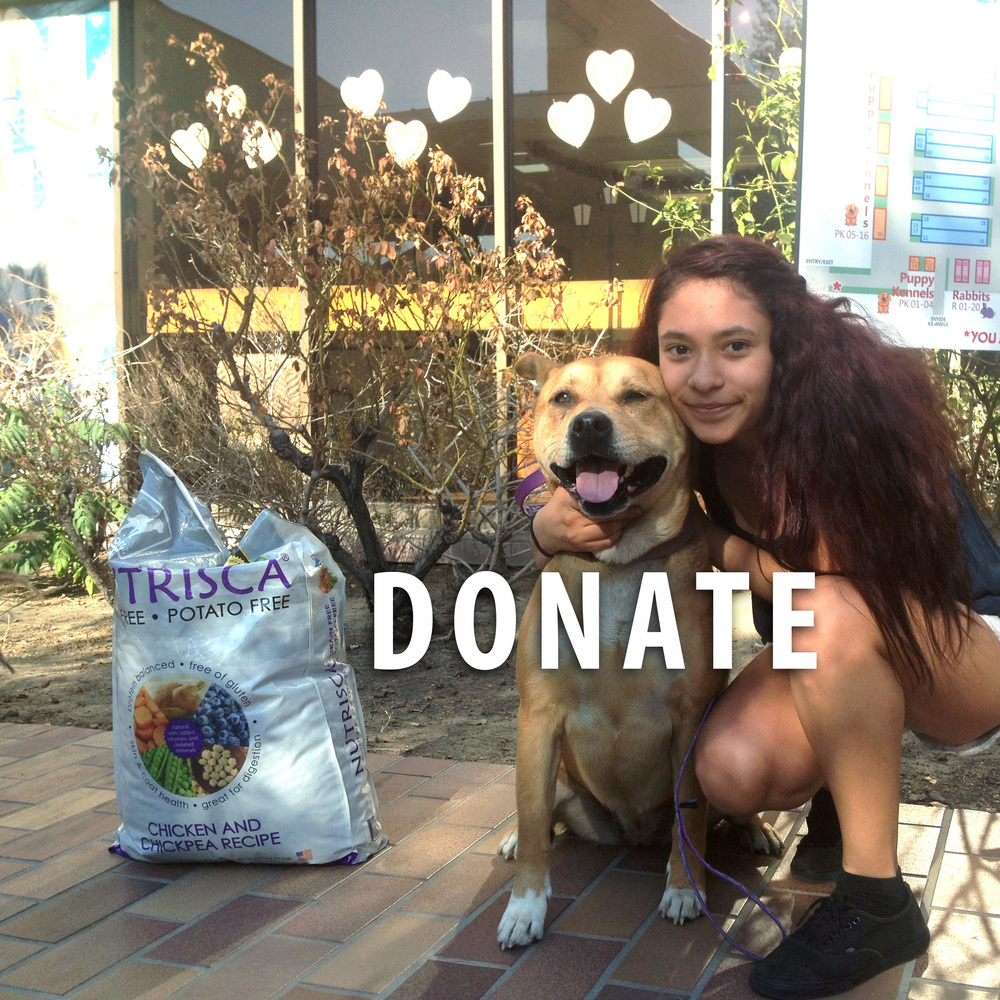 Euthanasia Dog At Home Los Angeles
