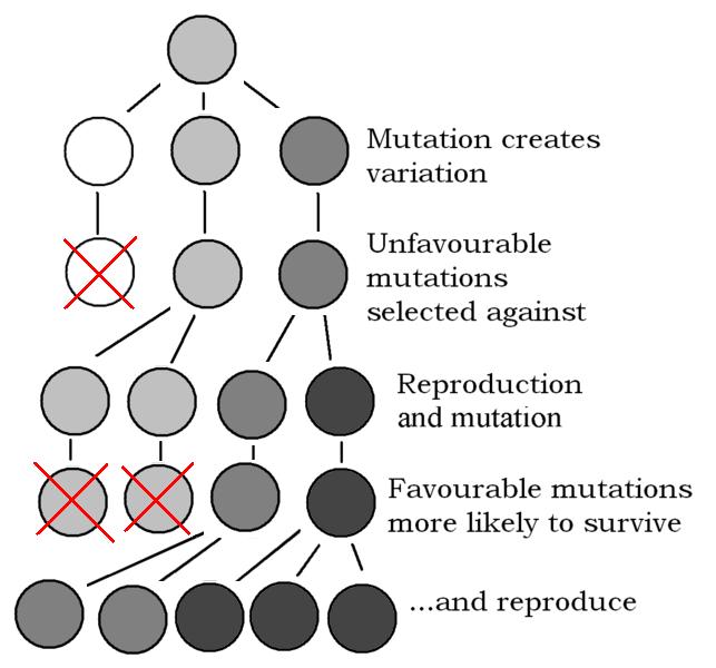 643px-Explanation_of_Evolution_v2.1.PNG