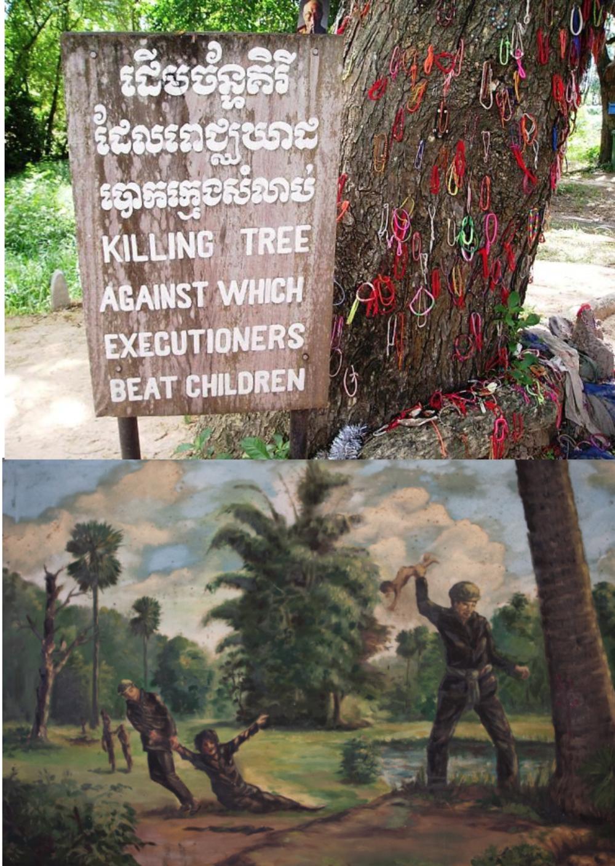 Árbol Chankiri o Árbol de la Muerte