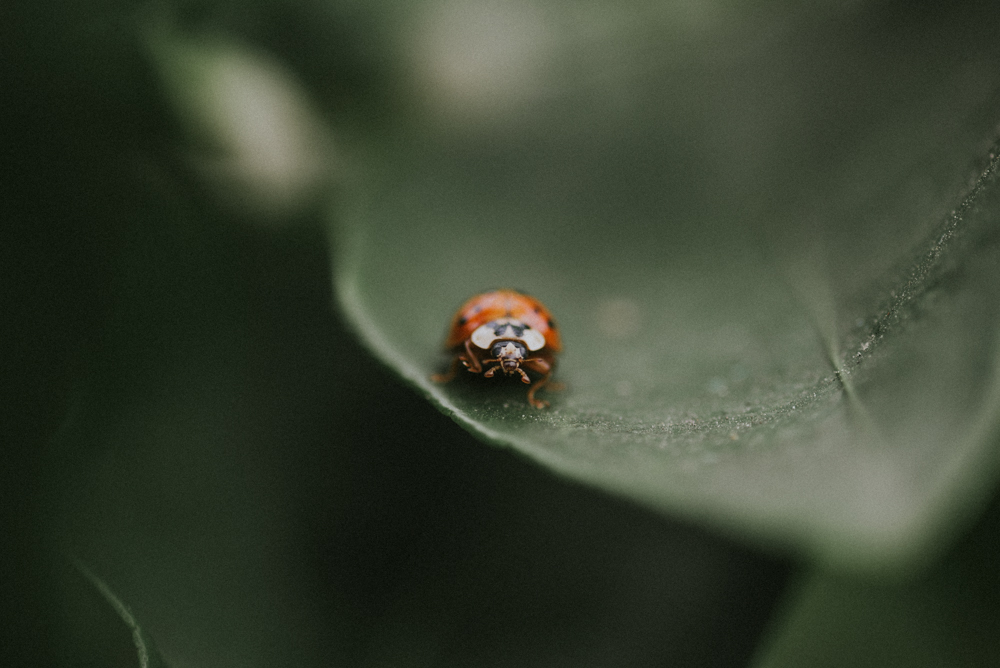 Florida Oranges & Lady Bug | Tampa Bay Area Photographer | Aloha Shii