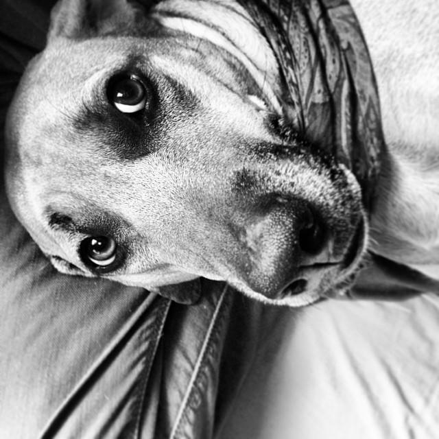 atoka chase dog