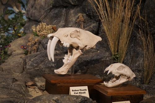 Glendive Dinosaur and Fossil Museum, Glendive, Montana